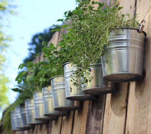 Herbs on fence