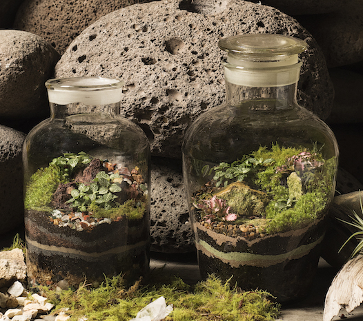 Closed terrariums with layers