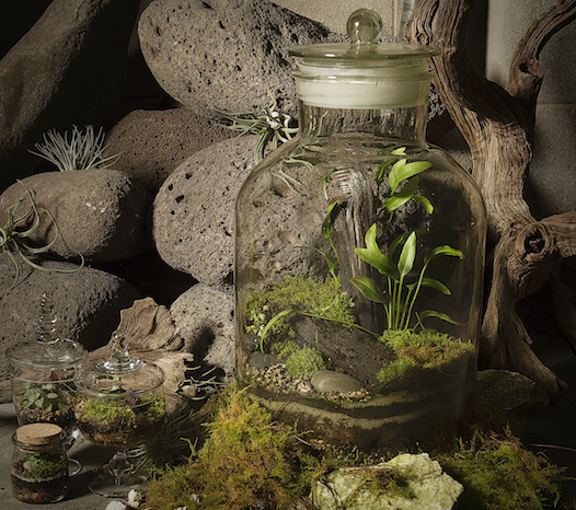 Closed terrarium