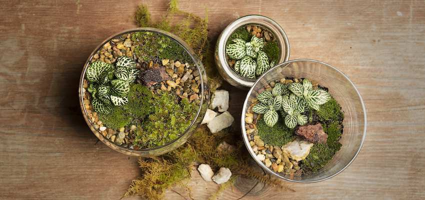 Three Open Terrariums